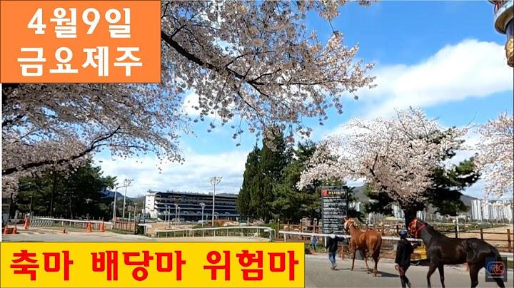 경마! 4월7일 라이브 방송/ 4월9일 금요경마(제주) 축마 배당마 위험마