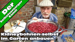 Kidneybohnen  im Garten erfolgreich anbauen