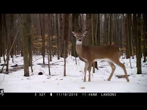 Michigan Trail Cam Critters 112019