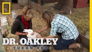 Who's the Bunny's Daddy? | Dr. Oakley, Yukon Vet