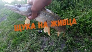 Щука на живца в мае рыбалка на щуку