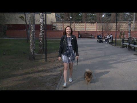 Вопрос: Как выгуливать собаку?