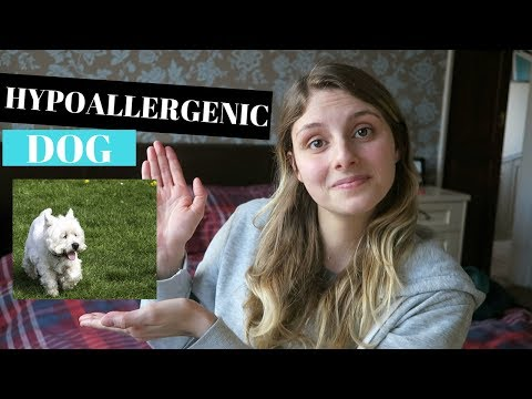 HYPOALLERGENIC DOGS THAT DON'T SHED - 5 SMALL BREEDS