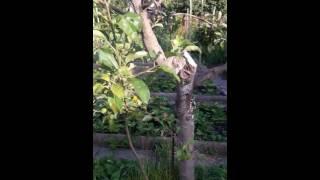 видео Борьба с короедом на яблоне, как избавиться от короеда на яблоне, методы как уничтожить на плодовых деревьях