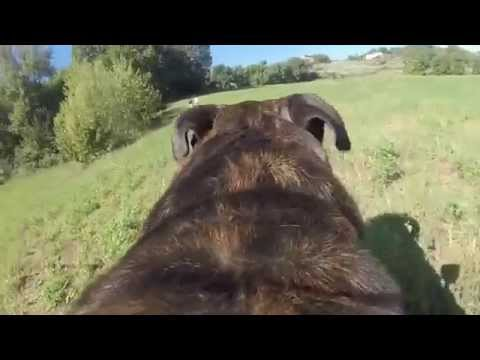 dogs in the wood with a gopro
