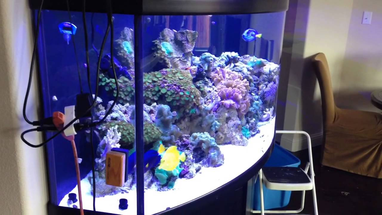 180 gallon extreme bow front youtube for 180 gallon fish tank