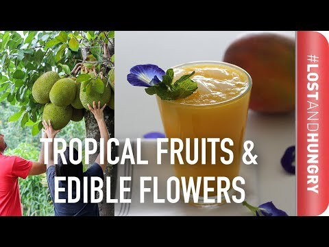 what-to-eat-in-florida---mango,-jackfruit-&-edible-flowers-#lostandhungry
