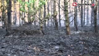 Gigantyczny pożar lasu w Glebie pod Ostrołęką