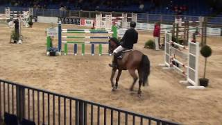 Lascar, Gelding, *2008, Show Jumping