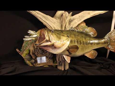 High-end Largemouth Bass Fish Replica Mounts Marine Creations Taxidermy