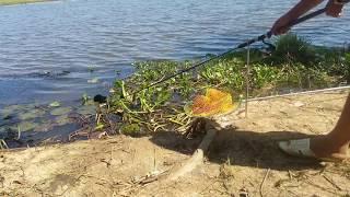 VỪA MỚI XUỐNG MỒI E 4KG LẠI  BEN CẦN LIỀN // FISHING IN THE RIVER