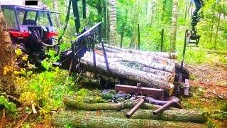 Zrywka drewna ZETOR- wyjazd z lasu z poważną awarią [tahání dřeva, izvlačenje drva, #zrywka_drewna]