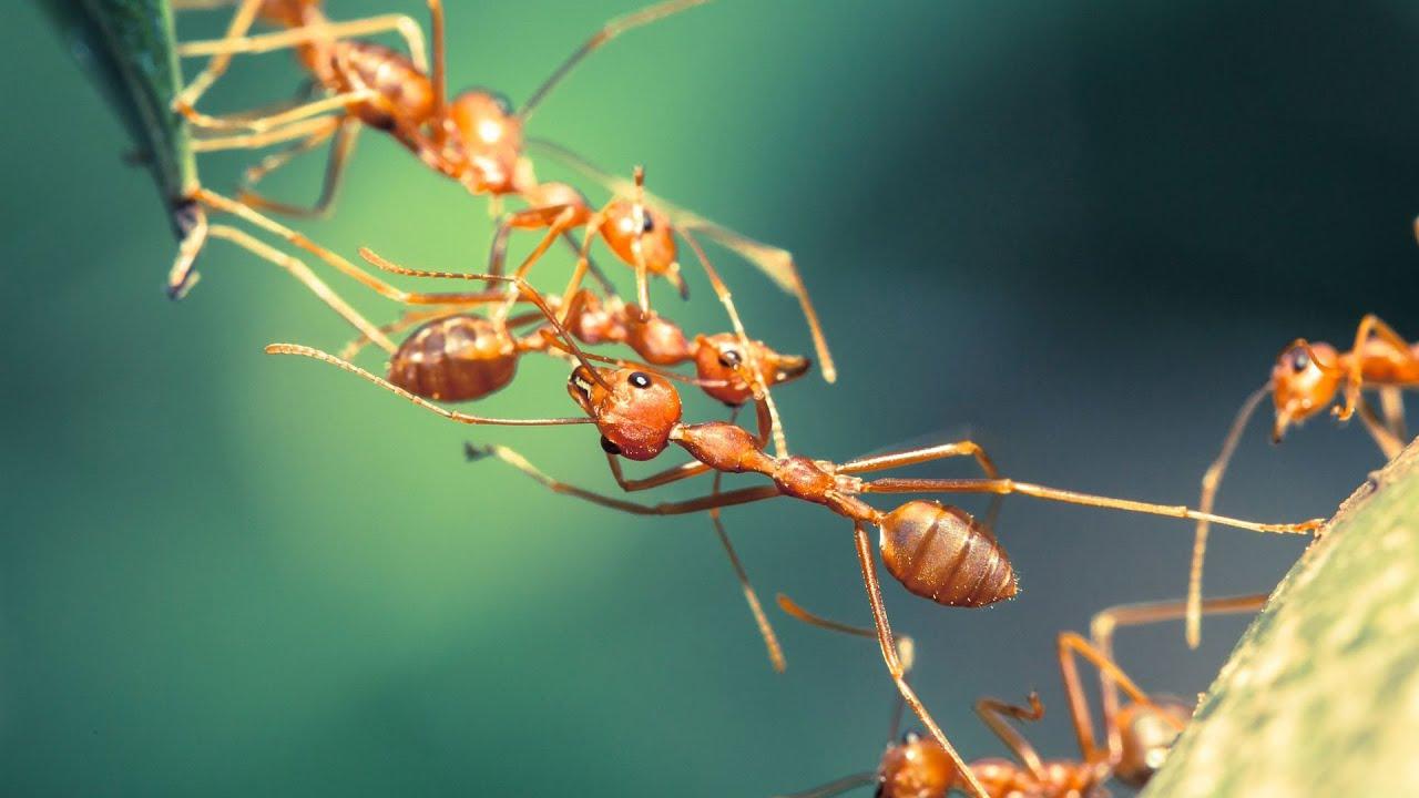 ما لم تسمعه من قبل عن عالم النمل المدهش !!