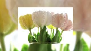 Розыгрыш!!!Видео-урок ,,Тюльпаны из холодного фарфора,, +,.Роза из холодного фарфора,,
