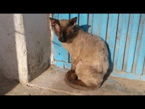 Экзотичная кошка поджимала лапки, сидя на осеннем холоде