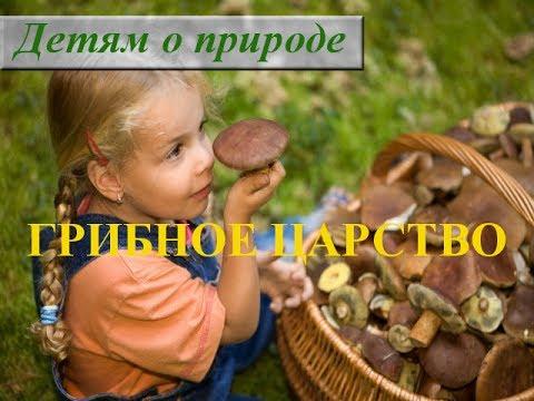 Царство грибов 2 класс ☂ Информация о грибах для детей