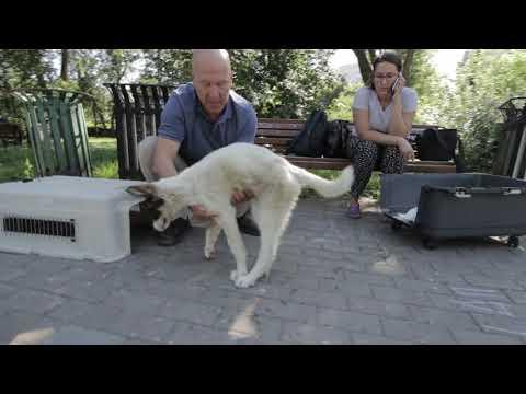 Вера, слепой щенок. Тяжёлая травма головы. Нижневартовск.