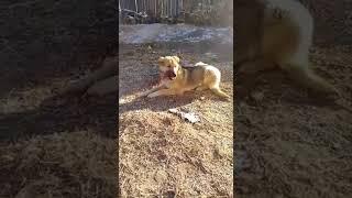 Собака ест говно?!?!😰😰😰