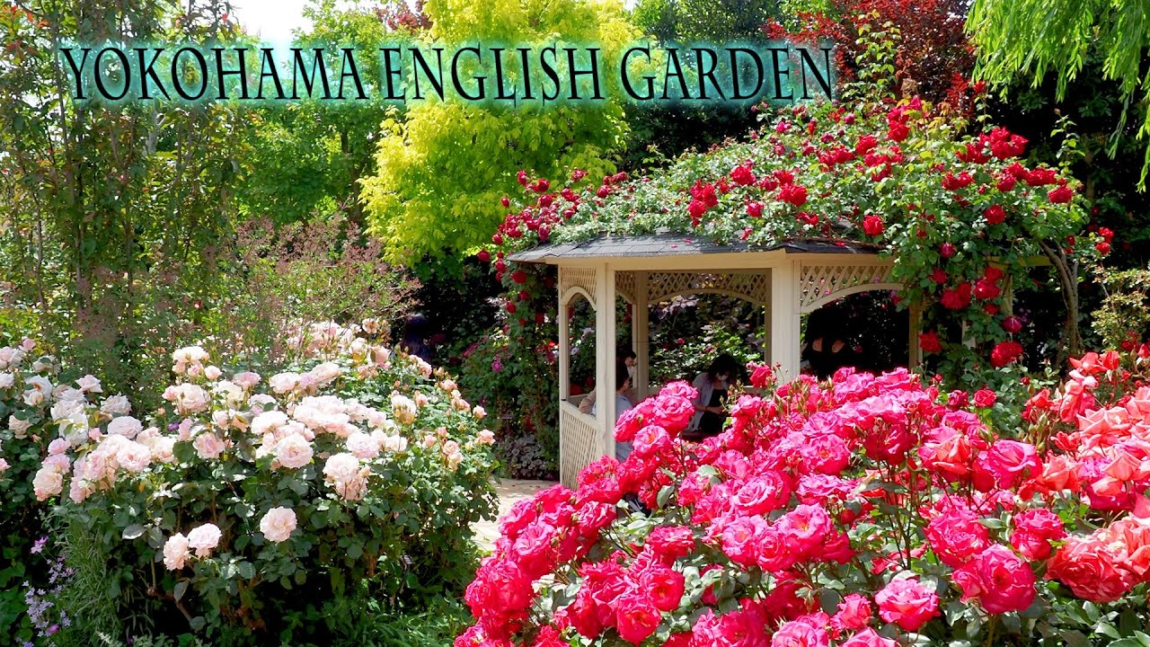 Yokohama English Garden 2021 Spring.  禅ローズ   #4K  #横浜イングリッシュガーデン #Rose