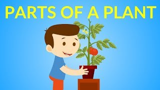 Parts of a Plant for kids || Parts of a Plant
