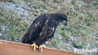 swfl-eagles-e9-flies-to-the-fence-part-one-3-14-17