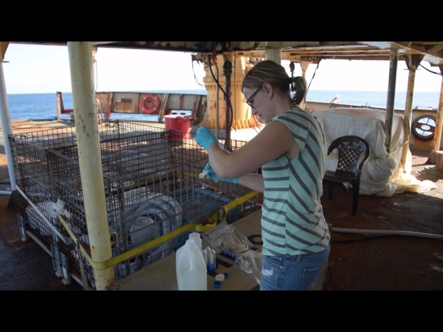 Our Scientists – From Coast to Coast to Coast – Lindsay Beazley