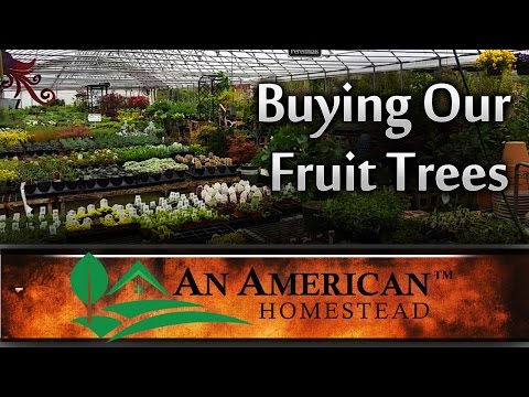Buying Our Fruit Trees - An American Homestead