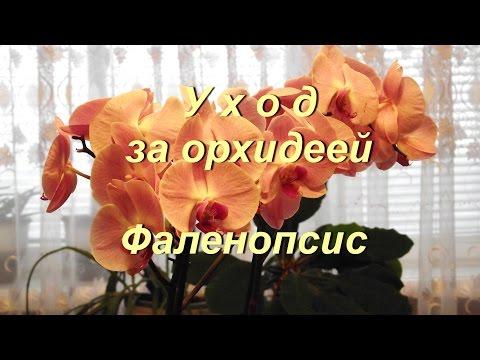 orchids_lux - Profile