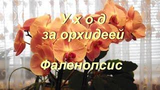 Уход за орхидеей  .Care of orchid(Уход за орхидеей .Care of orchid Уход за орхидеей Фаленопсис Условия содержания Подоконник – для Фаленопсис..., 2016-04-12T14:04:24.000Z)