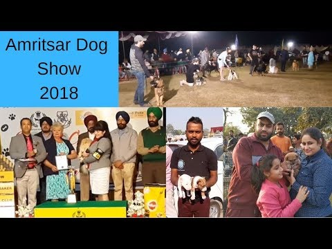 Amritsar Dog Show 2018 - Wholesale dog market