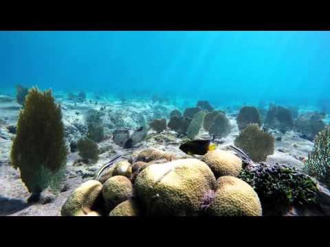 Stanton 10 Year Anniversary Trip - Grand Cayman Island