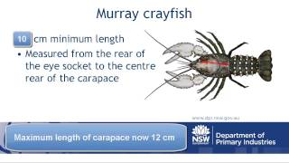 How to measure crustaceans (Version 2)