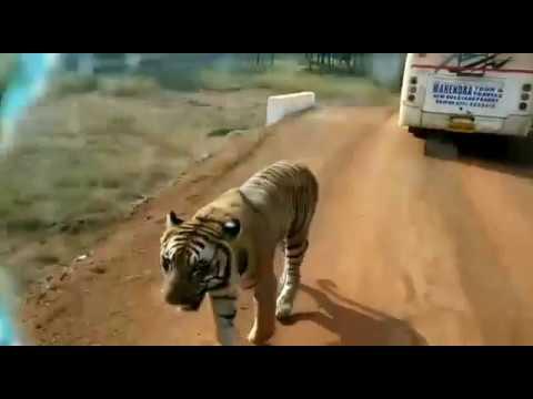 Jungle safari Raipur