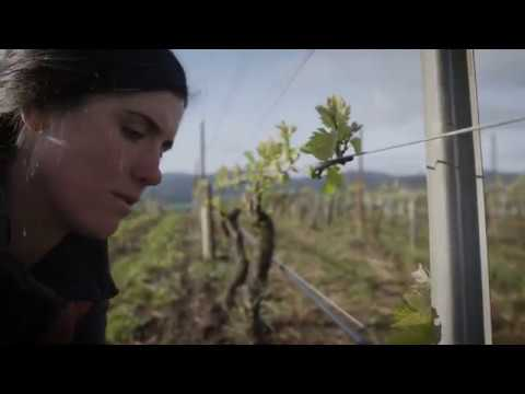 Visit McMinnville: The Heart of Oregon Wine Country