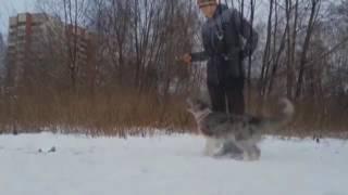 Собака Эри вместе с хозяйкой танцуют тверк