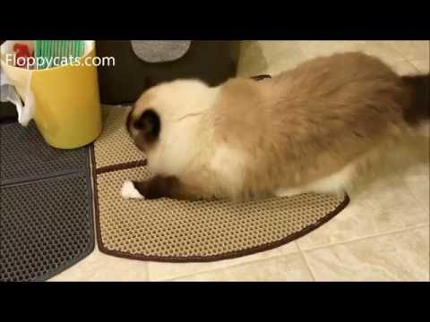 Ragdoll Cat Uses WooPet Cat Litter Mat for Scratching - Floppycats