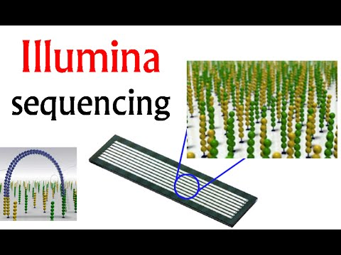 Illumina sequencing | DNA sequencing by synthesis