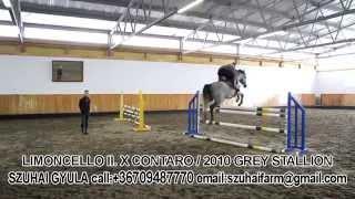 43.limoncello Ii. X Contaro (horses For Sale)