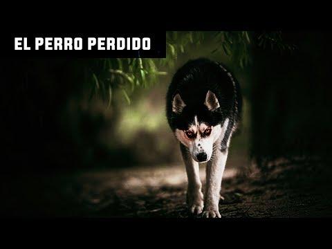 Historia De Terror - EL PERRO PERDIDO - horror cuentos reales leyenda