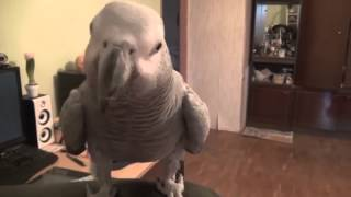 Смешное видео про говорящего попугая