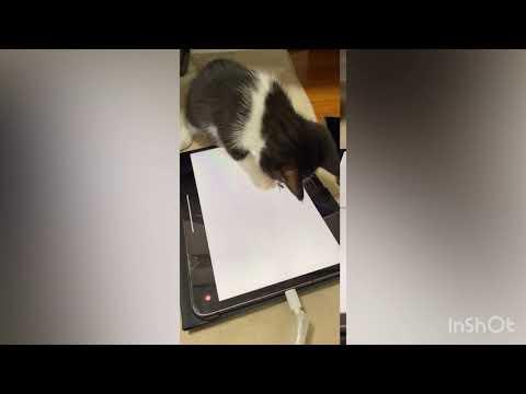 【保護猫】虫のゲームで遊ぶ子猫がかわいい。                               ライスVer.
