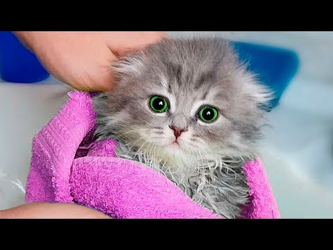 8 Steps To Making Your Cat's Love A Miracle