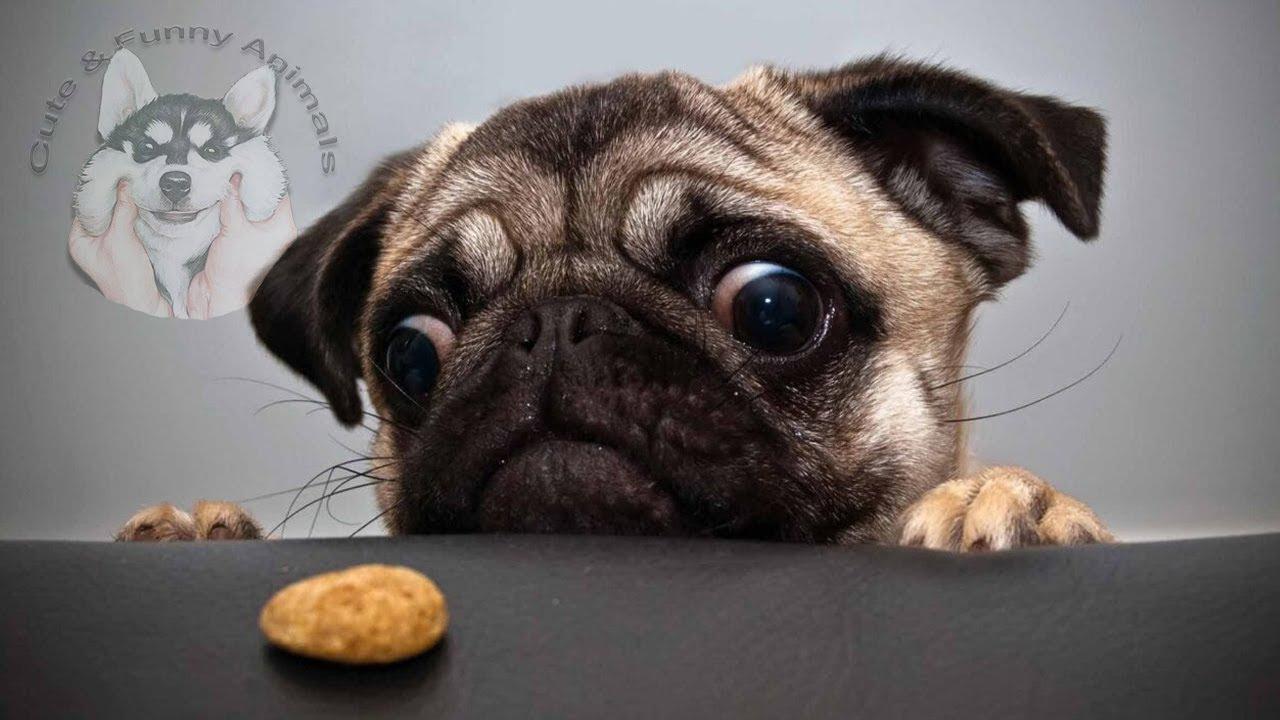 Funniest and Cutest Animals, Dog Fails Cat Fails, Funny Pets, Funny Cats, Funny Dogs, Funny videos#9