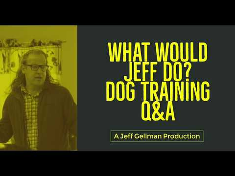 Stop dog from jumping | Stop dog from chasing dogs | What Would Jeff Do? Dog Training Q&A #424