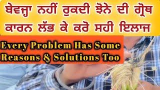 ਬੇਵਜ੍ਹਾ ਨਹੀਂ ਰੁਕਦੀ ਝੋਨੇ ਦੀ ਗ੍ਰੋਥ || ਕਾਰਨ ਲੱਭ ਕੇ ਕਰੋ ਸਹੀ ਇਲਾਜ || Every Problem Has Reasons & Solution