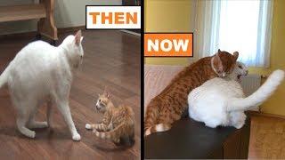 Little Kitten Got Big And Became The Alpha Cat !!