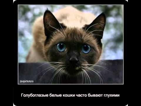 Интересный факты про котов