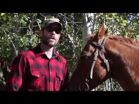 Tips For Hunting With Horses
