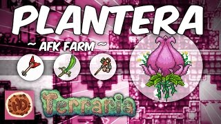 Video Terraria AFK Plantera Farm | Get the Axe, Venus Magnum, Seedler & More! (1.3 bosses, afk farms) download MP3, 3GP, MP4, WEBM, AVI, FLV November 2018