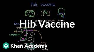 Hib vaccine | Respiratory system diseases | NCLEX-RN | Khan Academy